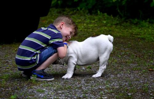 イングリッシュブルドッグに抱きつく小さな男の子