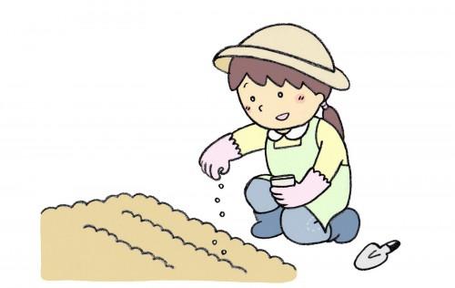 耕した庭に種を蒔く女性