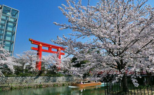 琵琶湖疎水の桜、平安神宮の大鳥居と十石船の写真
