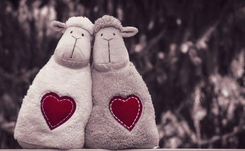 2匹の羊のぬいぐるみが寄り添っている。胸に大きなハートマークがある写真。